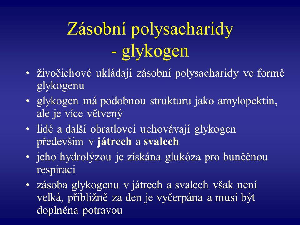 Zásobní polysacharidy - glykogen živočichové ukládají zásobní polysacharidy ve formě glykogenu glykogen má podobnou strukturu jako amylopektin, ale je