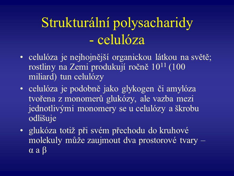 Strukturální polysacharidy - celulóza celulóza je nejhojnější organickou látkou na světě; rostliny na Zemi produkují ročně 10 11 (100 miliard) tun cel