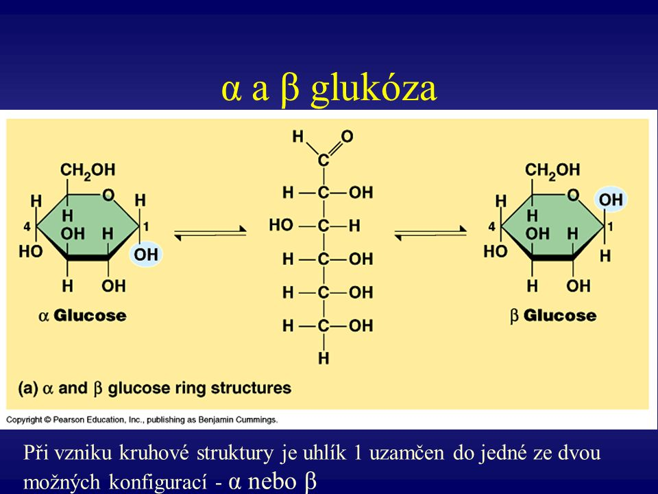 α a β glukóza Při vzniku kruhové struktury je uhlík 1 uzamčen do jedné ze dvou možných konfigurací - α nebo β