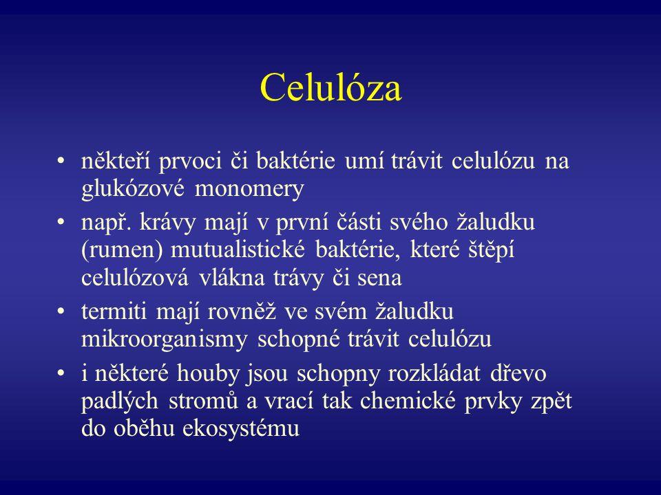 Celulóza někteří prvoci či baktérie umí trávit celulózu na glukózové monomery např. krávy mají v první části svého žaludku (rumen) mutualistické bakté
