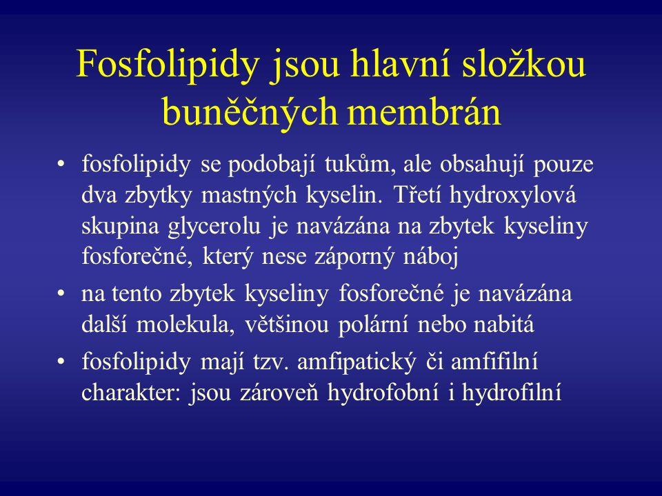 Fosfolipidy jsou hlavní složkou buněčných membrán fosfolipidy se podobají tukům, ale obsahují pouze dva zbytky mastných kyselin. Třetí hydroxylová sku