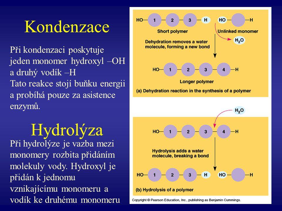 Kondenzace Hydrolýza Při kondenzaci poskytuje jeden monomer hydroxyl –OH a druhý vodík –H Tato reakce stojí buňku energii a probíhá pouze za asistence