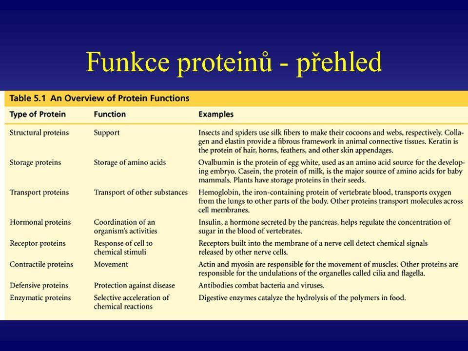 Funkce proteinů - přehled