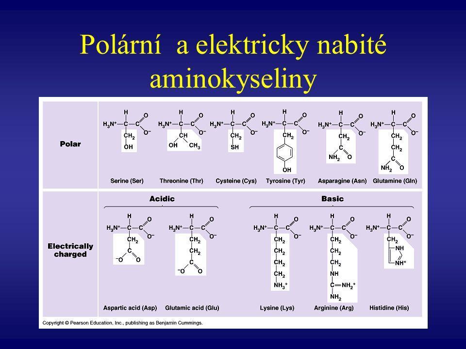 Polární a elektricky nabité aminokyseliny