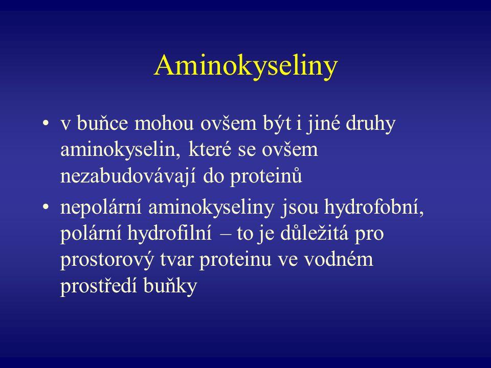 Aminokyseliny v buňce mohou ovšem být i jiné druhy aminokyselin, které se ovšem nezabudovávají do proteinů nepolární aminokyseliny jsou hydrofobní, po