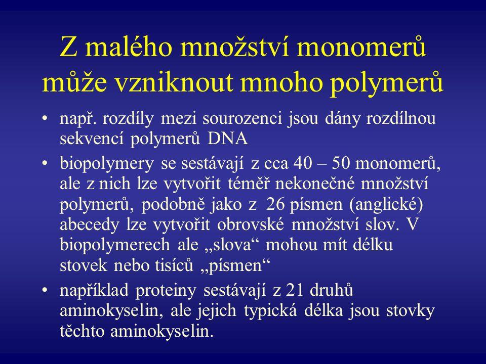 Zásobní polysacharidy - glykogen živočichové ukládají zásobní polysacharidy ve formě glykogenu glykogen má podobnou strukturu jako amylopektin, ale je více větvený lidé a další obratlovci uchovávají glykogen především v játrech a svalech jeho hydrolýzou je získána glukóza pro buněčnou respiraci zásoba glykogenu v játrech a svalech však není velká, přibližně za den je vyčerpána a musí být doplněna potravou