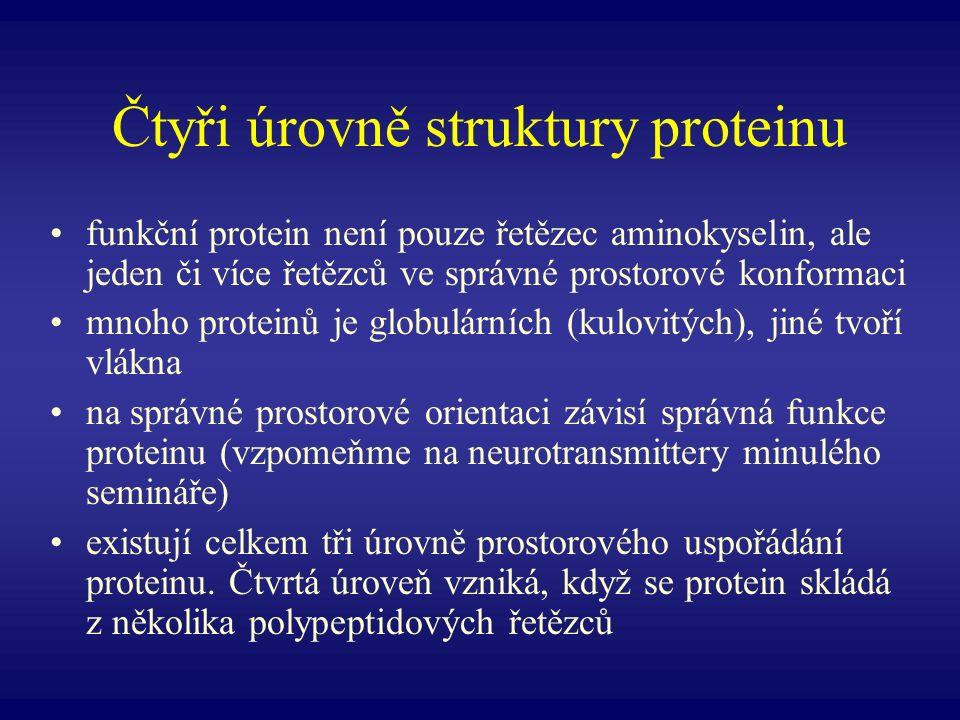 Čtyři úrovně struktury proteinu funkční protein není pouze řetězec aminokyselin, ale jeden či více řetězců ve správné prostorové konformaci mnoho prot