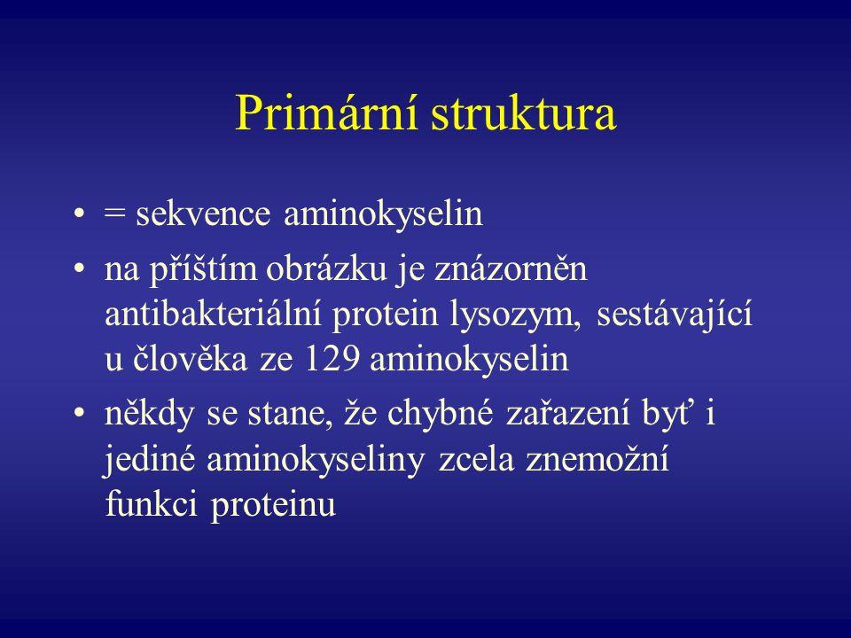 Primární struktura = sekvence aminokyselin na příštím obrázku je znázorněn antibakteriální protein lysozym, sestávající u člověka ze 129 aminokyselin