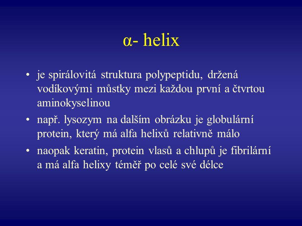 α- helix je spirálovitá struktura polypeptidu, držená vodíkovými můstky mezi každou první a čtvrtou aminokyselinou např. lysozym na dalším obrázku je