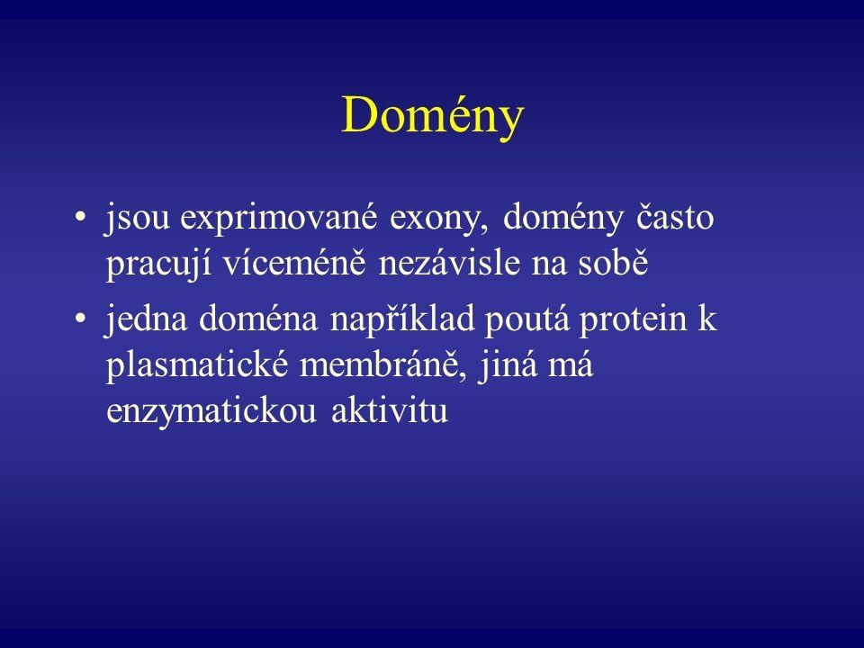 Domény jsou exprimované exony, domény často pracují víceméně nezávisle na sobě jedna doména například poutá protein k plasmatické membráně, jiná má en