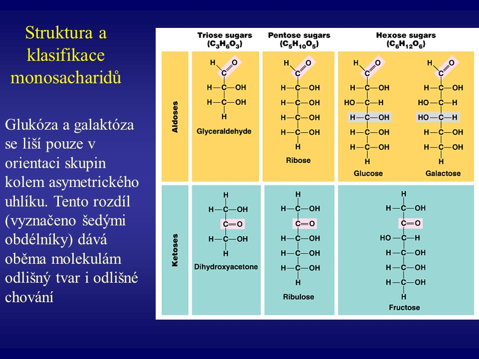 Syntéza a struktura triacylglycerolu