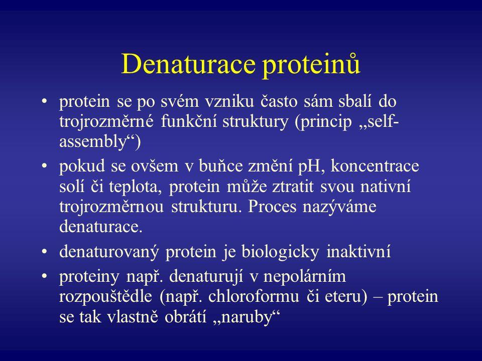 Denaturace proteinů protein se po svém vzniku často sám sbalí do trojrozměrné funkční struktury (princip self- assembly) pokud se ovšem v buňce změní