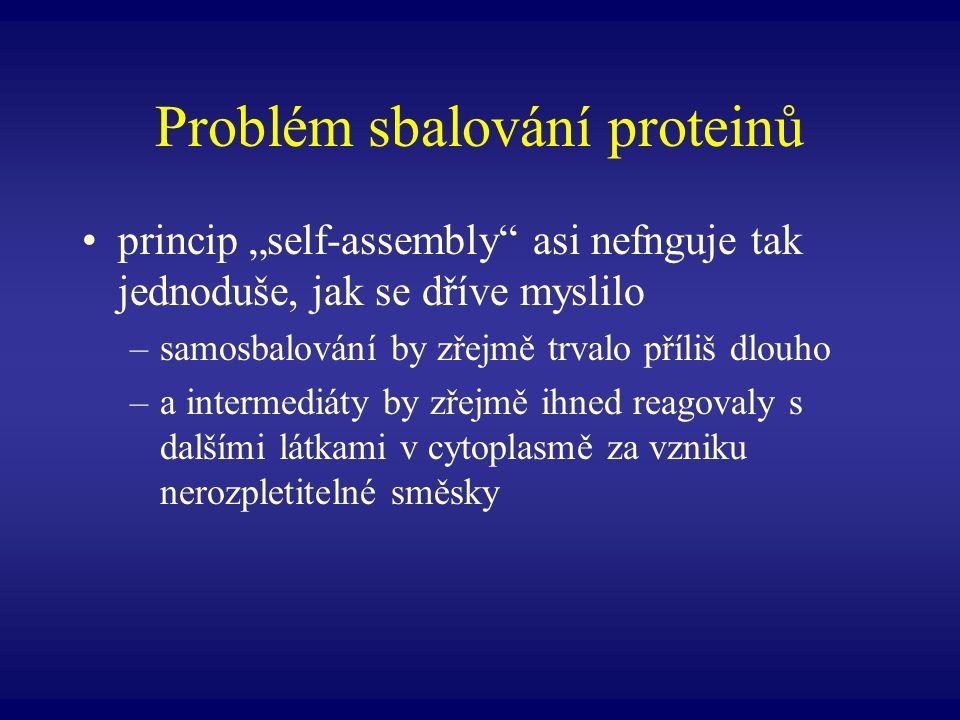 Problém sbalování proteinů princip self-assembly asi nefnguje tak jednoduše, jak se dříve myslilo –samosbalování by zřejmě trvalo příliš dlouho –a int