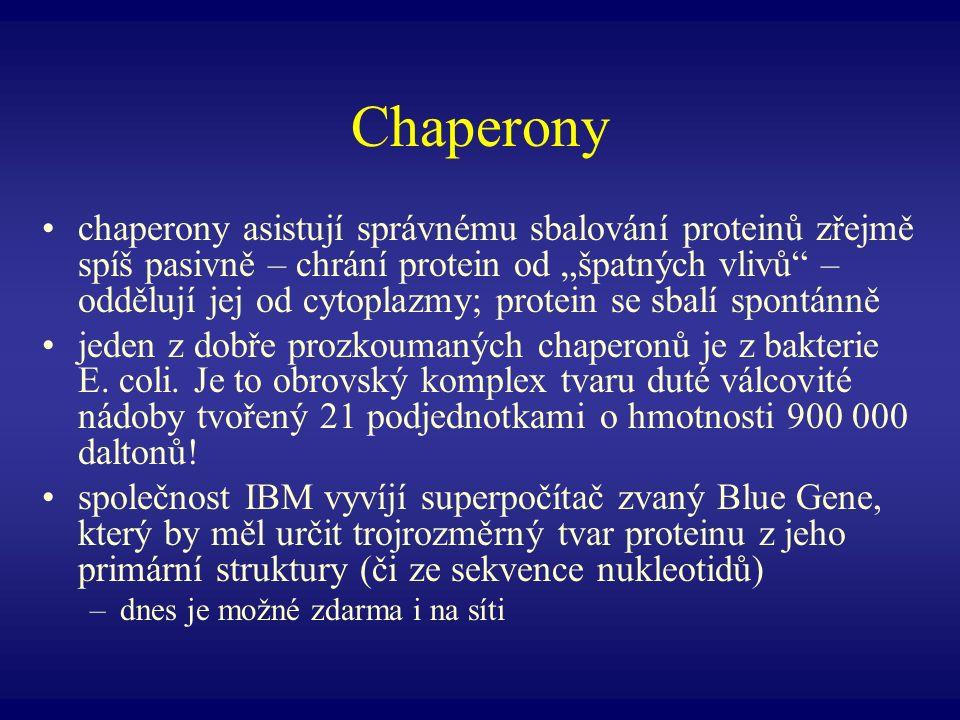 Chaperony chaperony asistují správnému sbalování proteinů zřejmě spíš pasivně – chrání protein od špatných vlivů – oddělují jej od cytoplazmy; protein