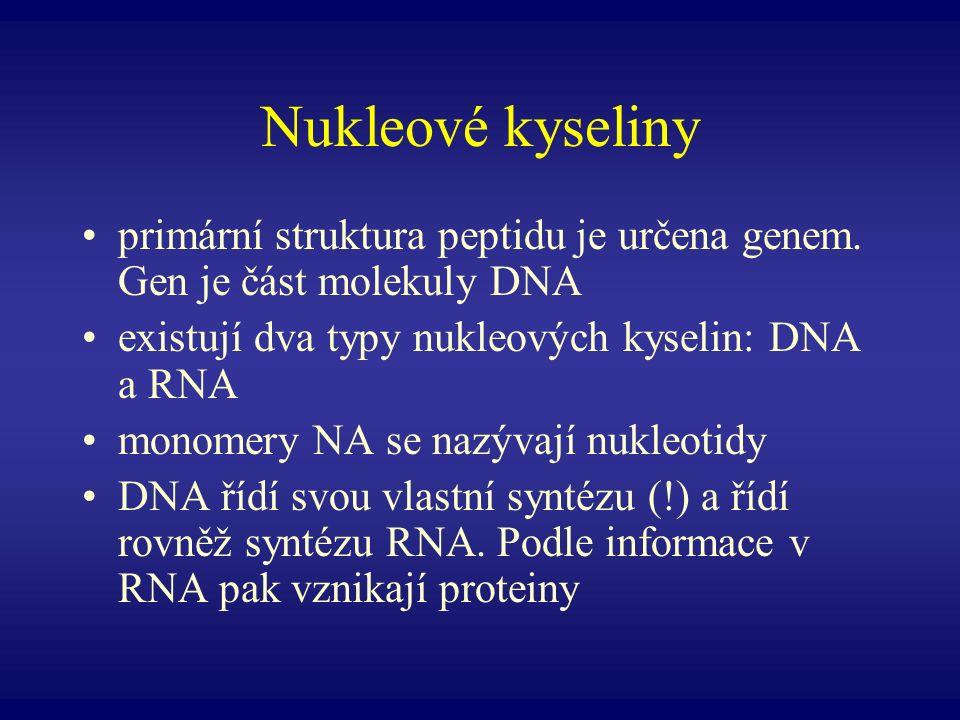 Nukleové kyseliny primární struktura peptidu je určena genem. Gen je část molekuly DNA existují dva typy nukleových kyselin: DNA a RNA monomery NA se