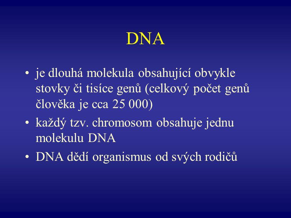DNA je dlouhá molekula obsahující obvykle stovky či tisíce genů (celkový počet genů člověka je cca 25 000) každý tzv. chromosom obsahuje jednu molekul