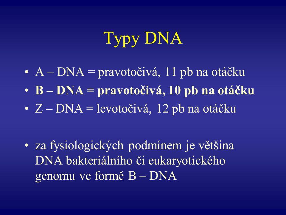 Typy DNA A – DNA = pravotočivá, 11 pb na otáčku B – DNA = pravotočivá, 10 pb na otáčku Z – DNA = levotočivá, 12 pb na otáčku za fysiologických podmíne