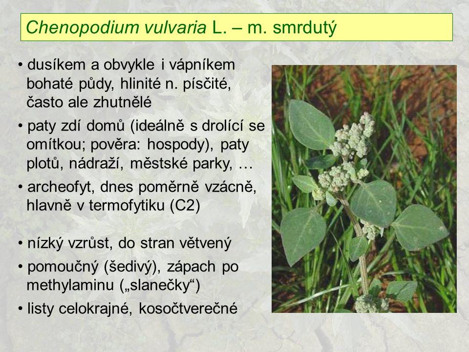 Chenopodium vulvaria L. – m. smrdutý dusíkem a obvykle i vápníkem bohaté půdy, hlinité n. písčité, často ale zhutnělé paty zdí domů (ideálně s drolící