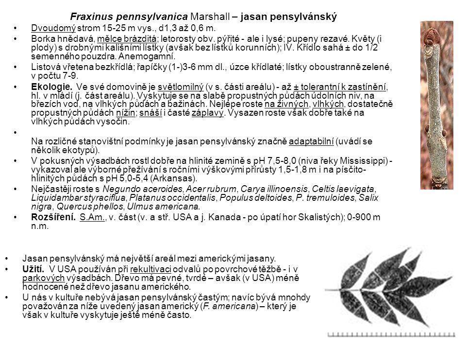 Fraxinus pennsylvanica Marshall – jasan pensylvánský Dvoudomý strom 15-25 m vys., d1,3 až 0,6 m.