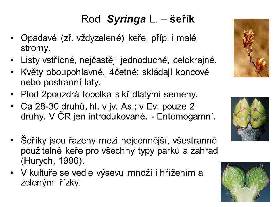 Rod Syringa L.– šeřík Opadavé (zř. vždyzelené) keře, příp.