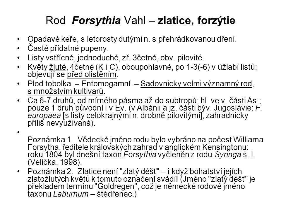 Rod Forsythia Vahl – zlatice, forzýtie Opadavé keře, s letorosty dutými n.