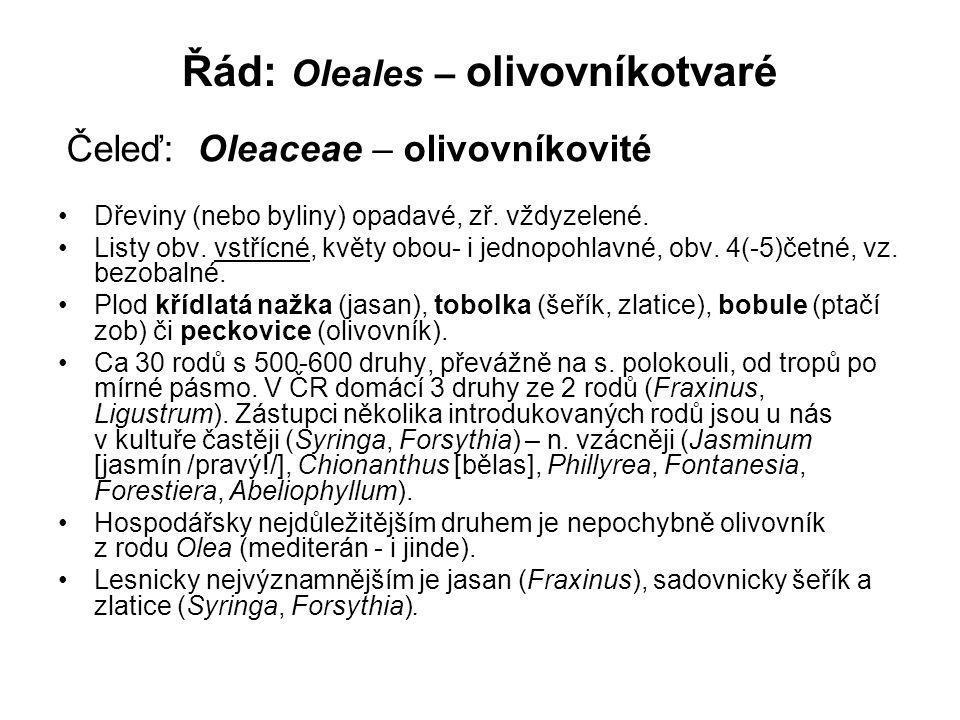 Řád: Oleales – olivovníkotvaré Dřeviny (nebo byliny) opadavé, zř.