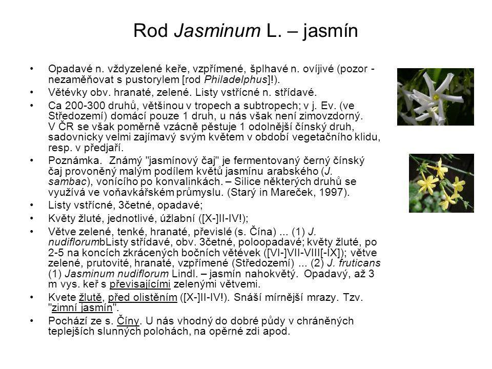 Rod Jasminum L.– jasmín Opadavé n. vždyzelené keře, vzpřímené, šplhavé n.