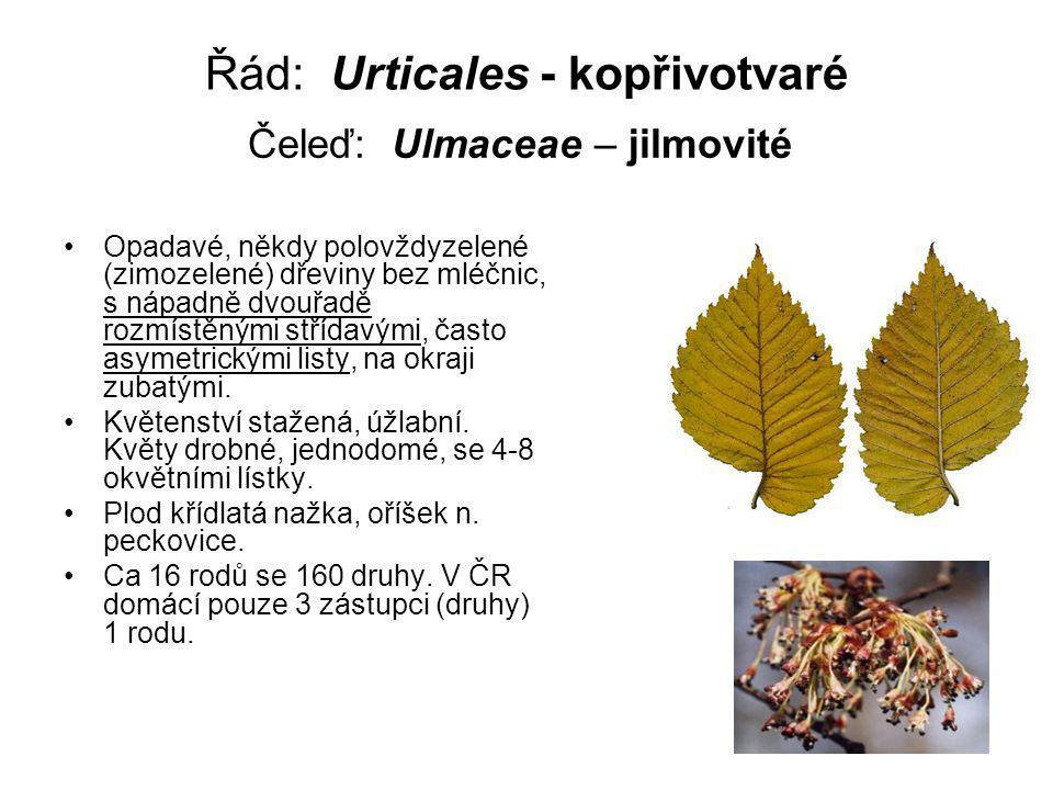 Řád: Urticales - kopřivotvaré Opadavé, někdy polovždyzelené (zimozelené) dřeviny bez mléčnic, s nápadně dvouřadě rozmístěnými střídavými, často asymetrickými listy, na okraji zubatými.