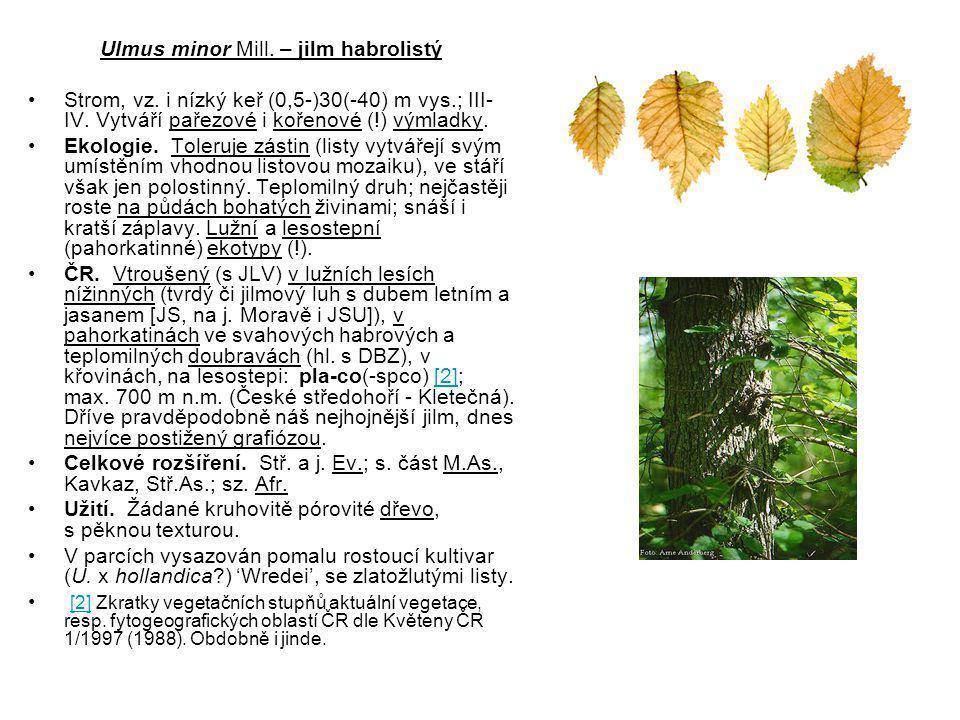 Ulmus minor Mill.– jilm habrolistý Strom, vz. i nízký keř (0,5-)30(-40) m vys.; III- IV.