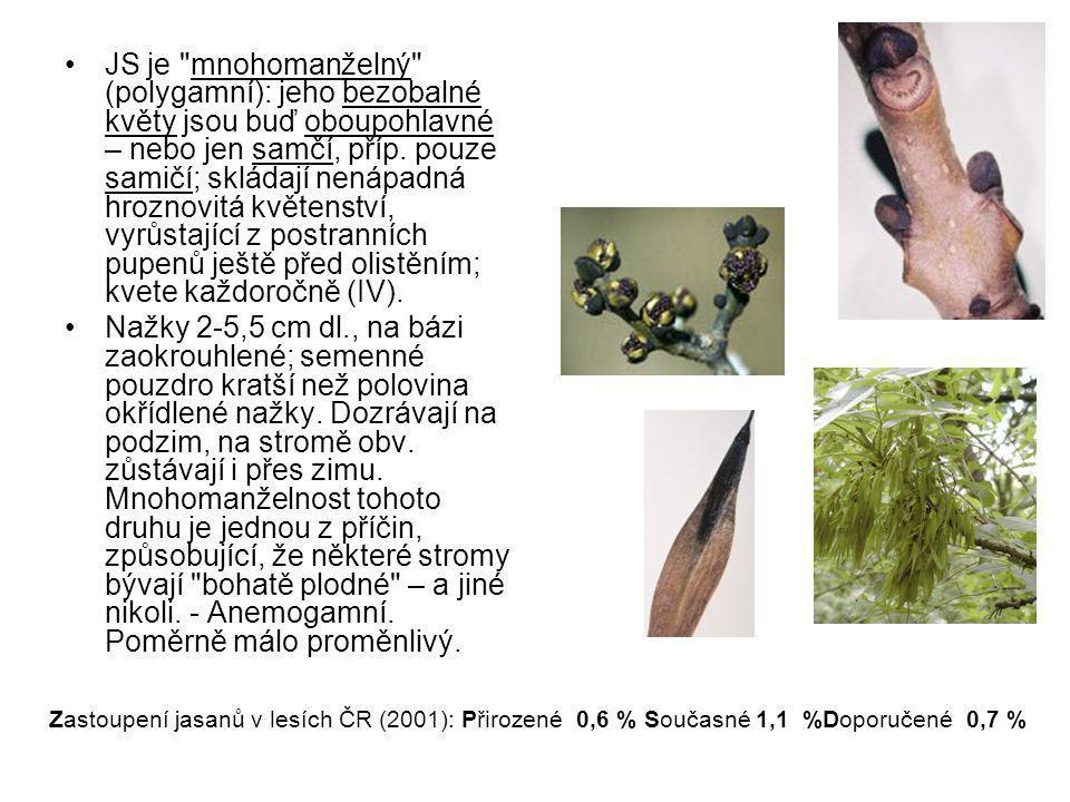 JS je mnohomanželný (polygamní): jeho bezobalné květy jsou buď oboupohlavné – nebo jen samčí, příp.