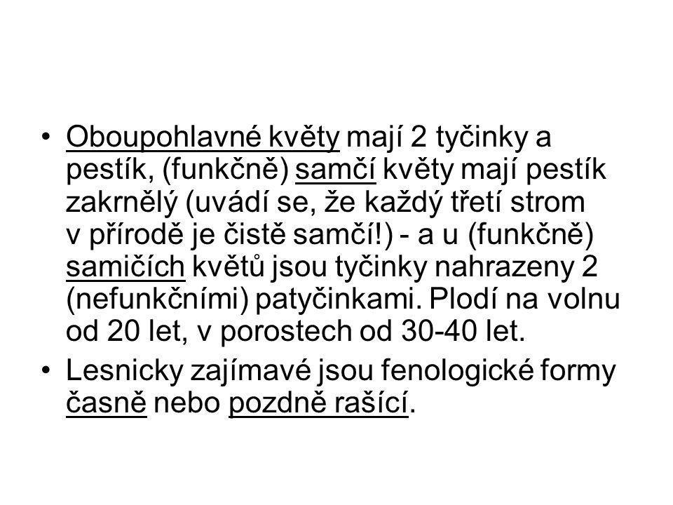 Syringa vulgaris L.– šeřík obecný Keř, příp. i malý strom 5(-7) m vys., d1,3 0,1-0,2 m.
