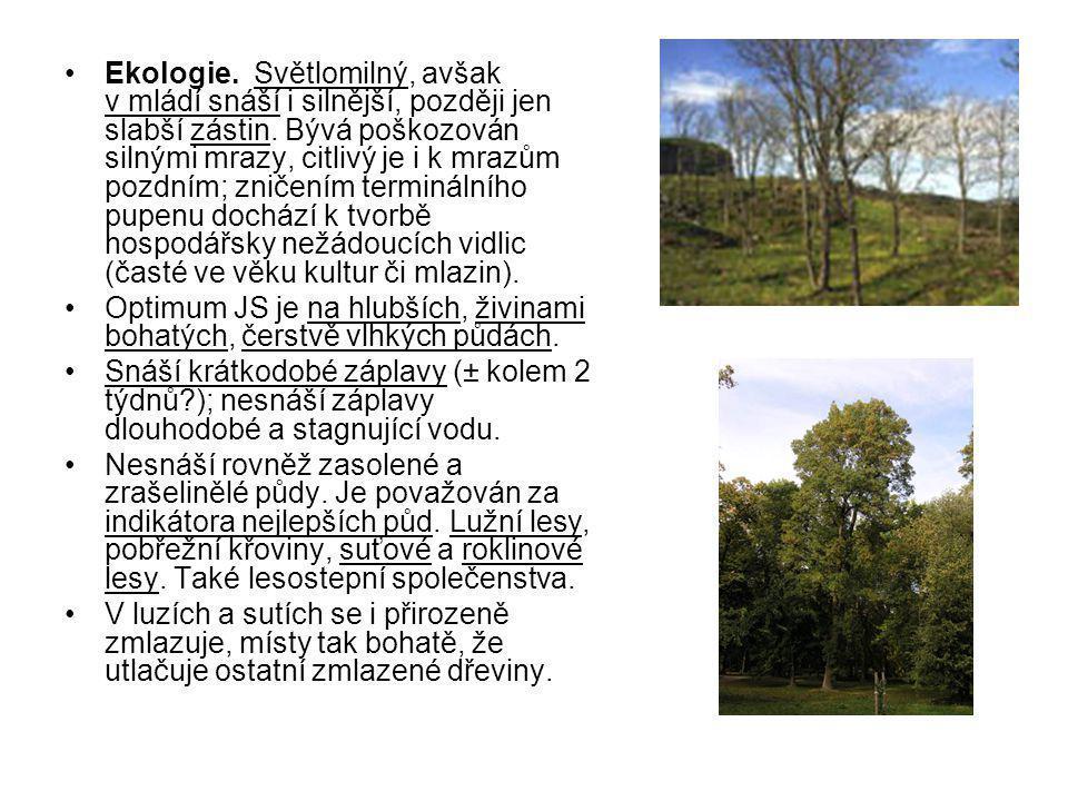 V lesnictví bývají rozlišovány 3 ekotypy jasanu ztepilého: lužní a horský (lokality vláhově příznivé) - a vápencový (lokality vláhově málo příznivé): Lužní ekotyp JS - v tvrdém (a přechodovém) luhu doprovází nejčastěji DB (letní!), JL a JLV.