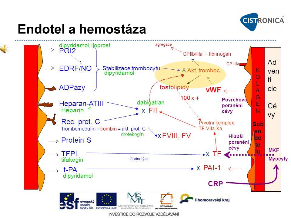 Hlubší poranění cévy Endotel a hemostáza K O L A G E N Sub en do te lu PGI2 EDRF/NO ADPázy Heparan-ATIII Rec. prot. C Trombomodulin + trombin = akt. p