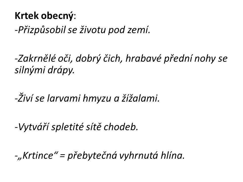 http://stezka.hamerskypotok.cz/media/zivocisi/krtek_obecny.jpg