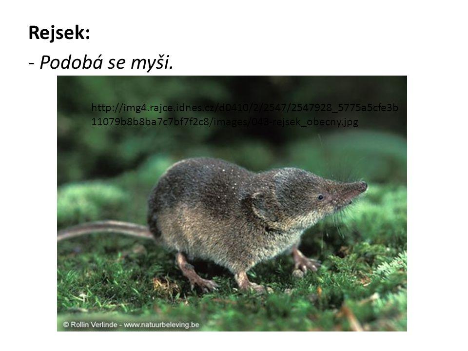 Rejsek: - Podobá se myši. http://img4.rajce.idnes.cz/d0410/2/2547/2547928_5775a5cfe3b 11079b8b8ba7c7bf7f2c8/images/043-rejsek_obecny.jpg