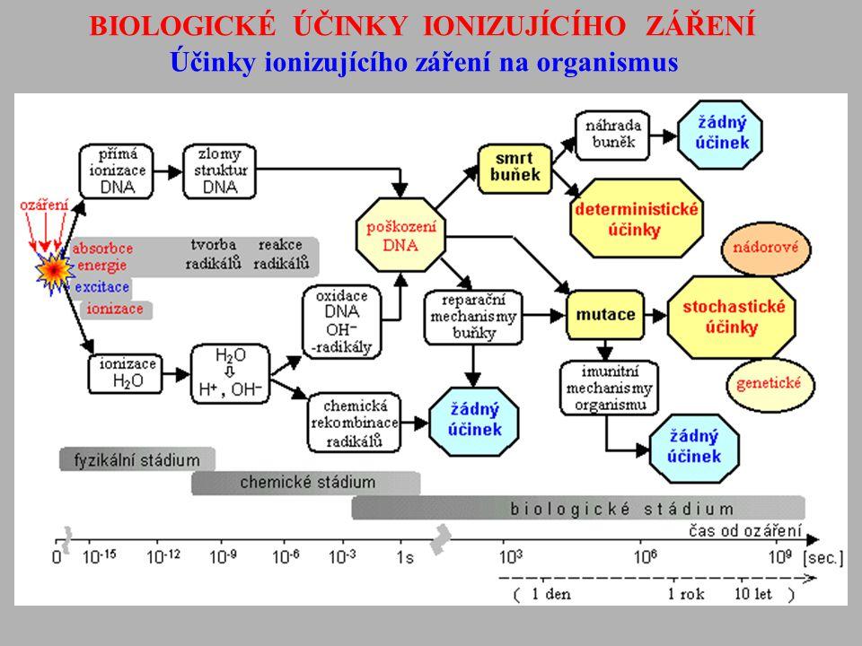 BIOLOGICKÉ ÚČINKY IONIZUJÍCÍHO ZÁŘENÍ Účinky ionizujícího záření na organismus