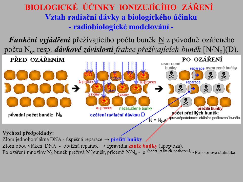 BIOLOGICKÉ ÚČINKY IONIZUJÍCÍHO ZÁŘENÍ Vztah radiační dávky a biologického účinku - radiobiologické modelování - Funkční vyjádření přežívajícího počtu