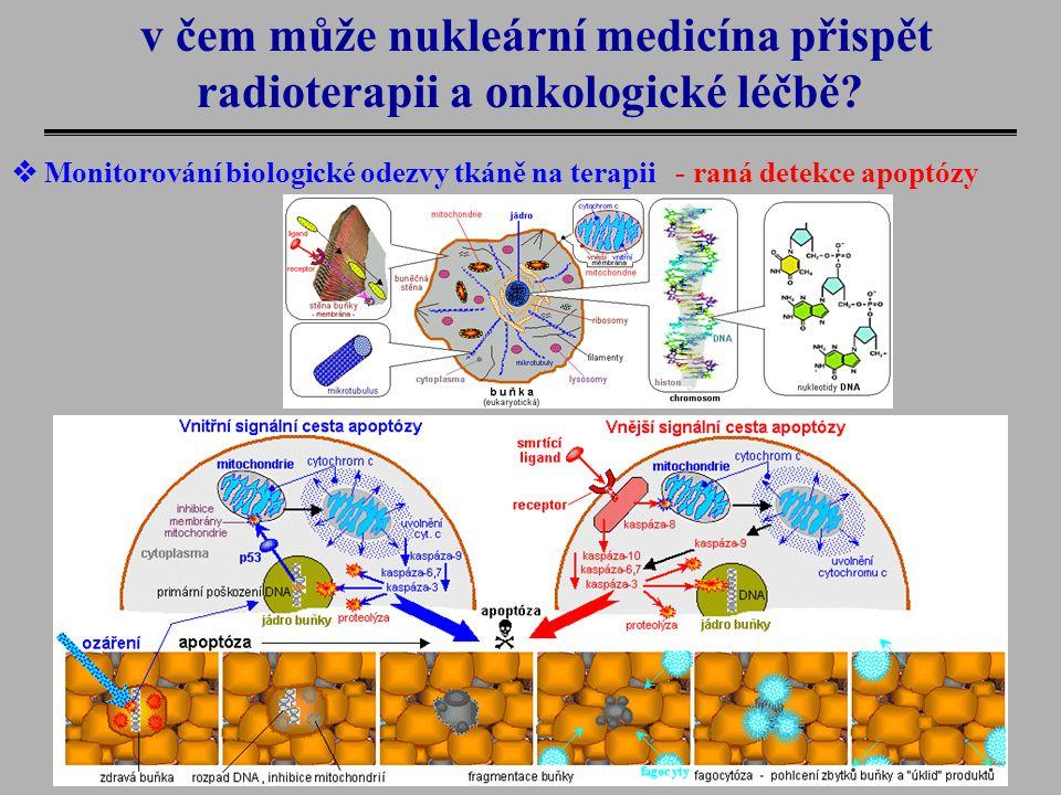 v čem může nukleární medicína přispět radioterapii a onkologické léčbě?  Monitorování biologické odezvy tkáně na terapii - raná detekce apoptózy