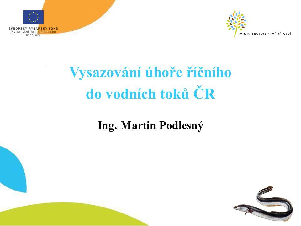 Vysazování úhoře říčního do vodních toků ČR Ing. Martin Podlesný
