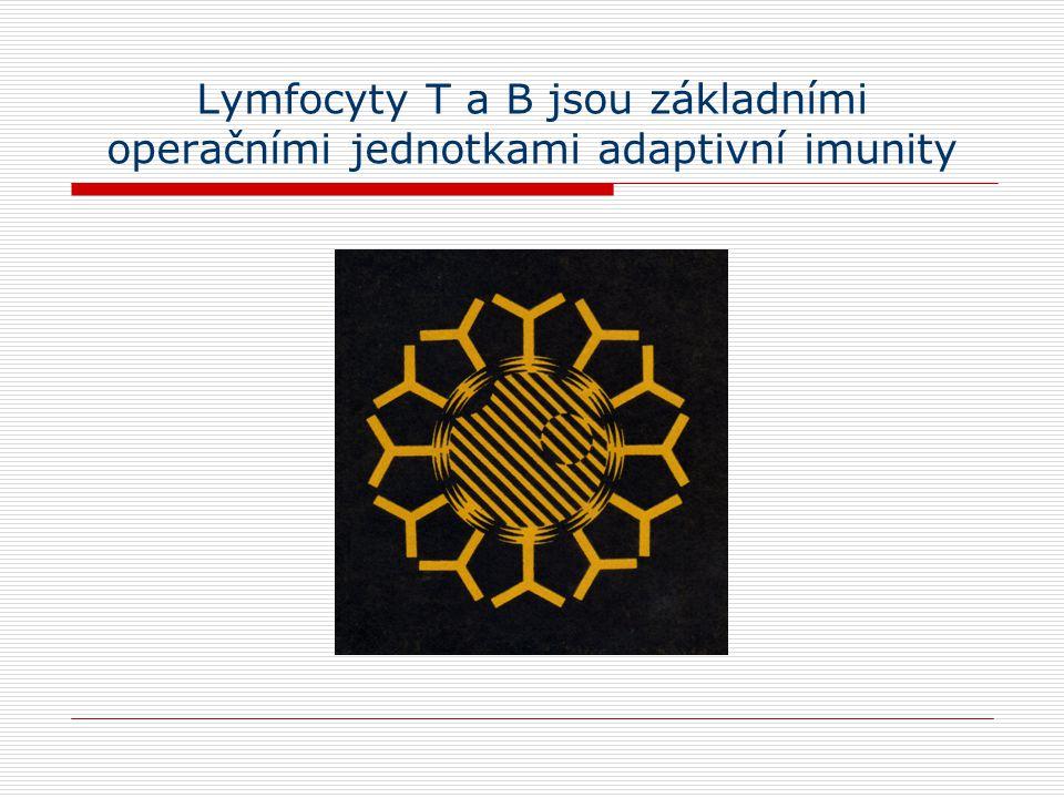 Buněčné základy adaptivní imunity Lymfoidní orgány (lymfadenopatie, asplenie, splenomegalie) (thymus) Vyšetření funkce lymfocytů in vivo tvorba protilátek po vakcinaci (imunoglobuliny v séru, ve slinách, v likvoru) celulární imunita (indukce kontaktní přecitlivělosti, multitest CMI) Vyšetření subpopulací lymfocytů in vitro imunofenotypizace (CD) funkční testy (proliferace, tvorba cytokinů, Ig)