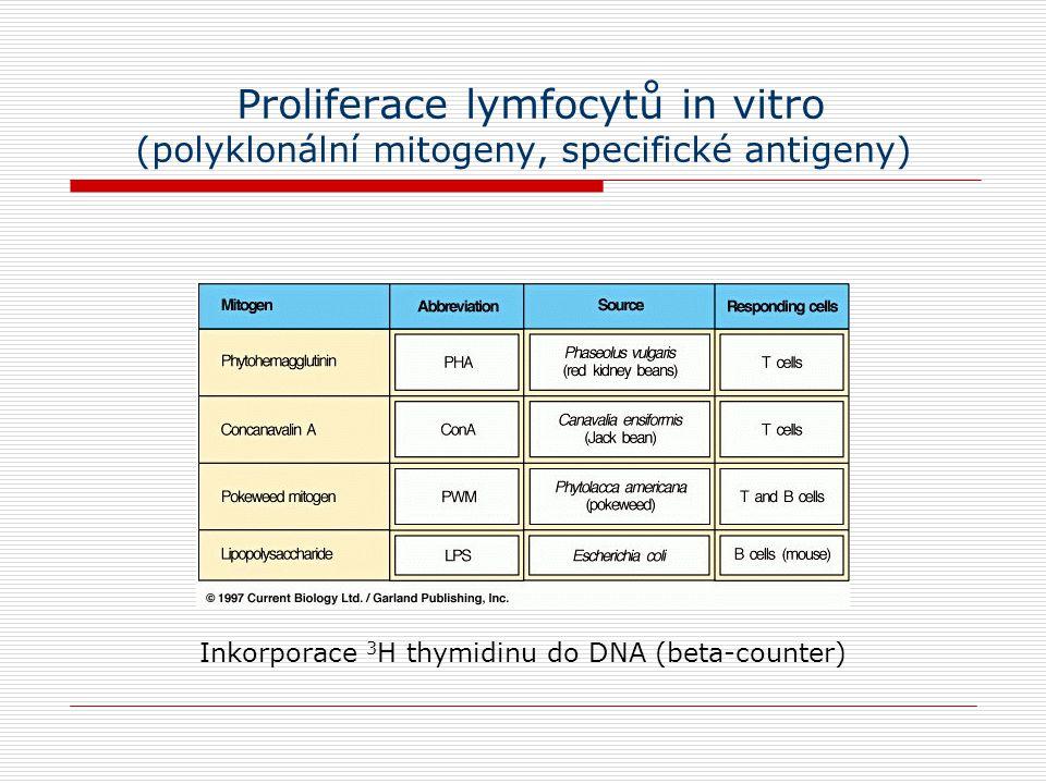 Proliferace lymfocytů in vitro (polyklonální mitogeny, specifické antigeny) Inkorporace 3 H thymidinu do DNA (beta-counter)