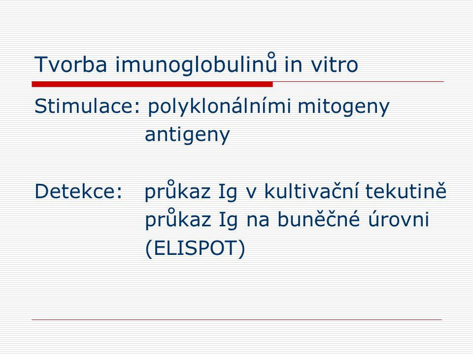 Tvorba imunoglobulinů in vitro Stimulace: polyklonálními mitogeny antigeny Detekce: průkaz Ig v kultivační tekutině průkaz Ig na buněčné úrovni (ELISPOT)