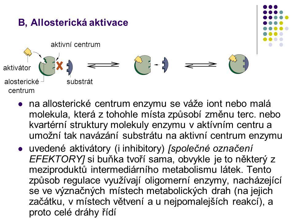 B, Allosterická aktivace na allosterické centrum enzymu se váže iont nebo malá molekula, která z tohohle místa způsobí změnu terc. nebo kvartérní stru