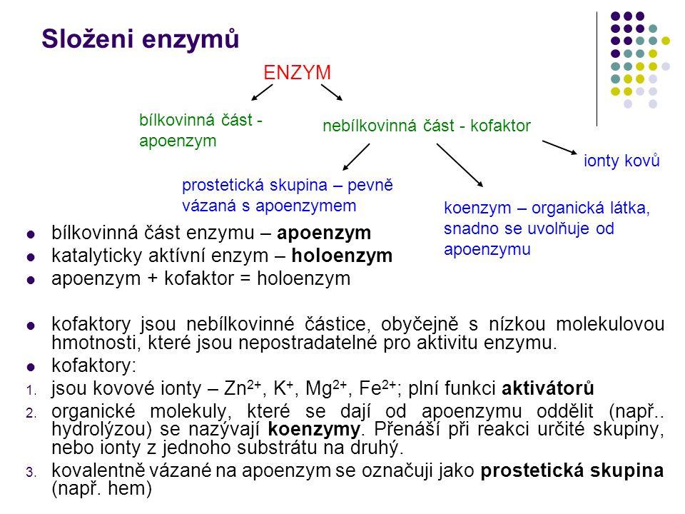 Složeni enzymů bílkovinná část enzymu – apoenzym katalyticky aktívní enzym – holoenzym apoenzym + kofaktor = holoenzym kofaktory jsou nebílkovinné čás