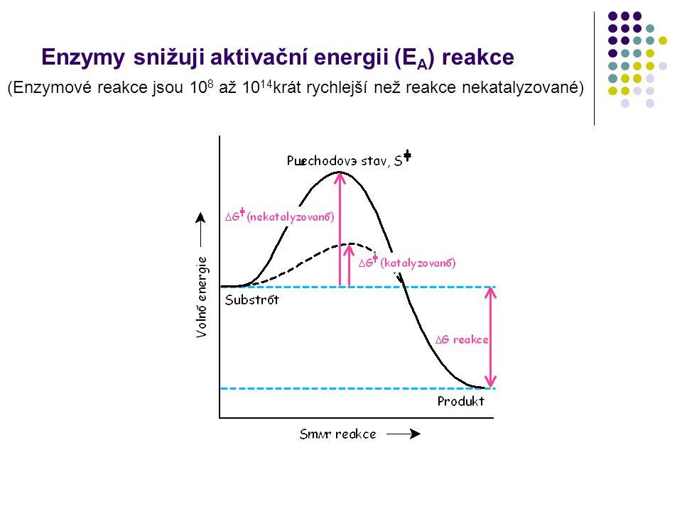 Enzymy snižuji aktivační energii (E A ) reakce (Enzymové reakce jsou 10 8 až 10 14 krát rychlejší než reakce nekatalyzované)