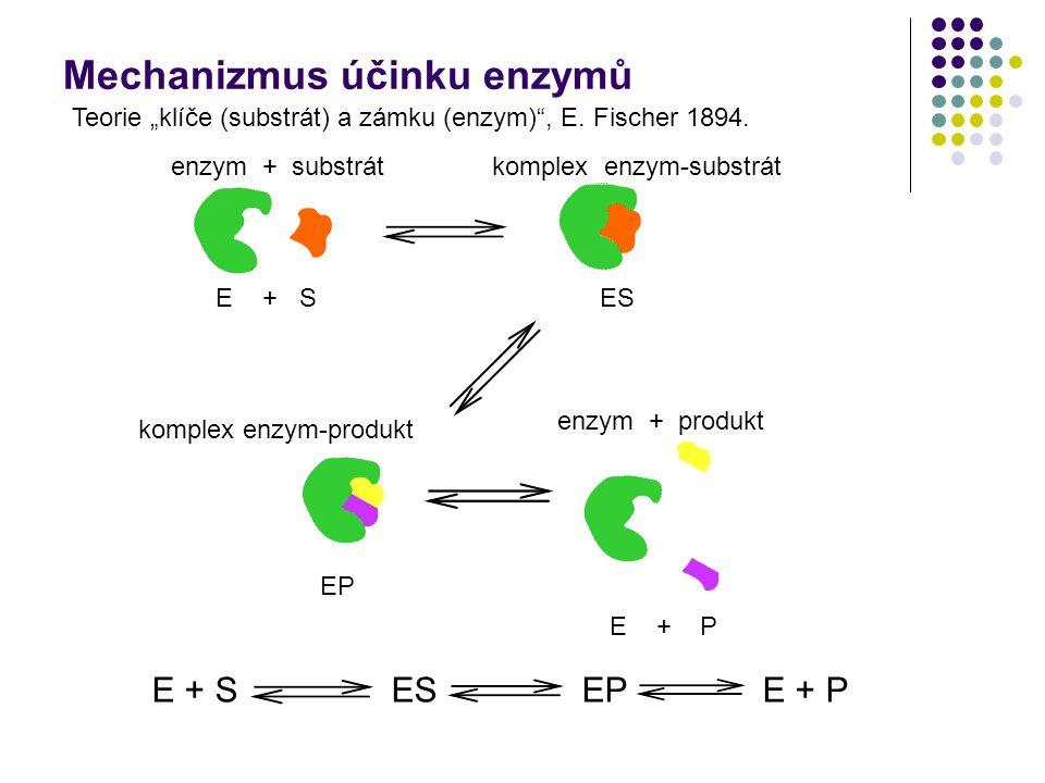 """Mechanizmus účinku enzymů enzym + substrátkomplex enzym-substrát E + S komplex enzym-produkt enzym + produkt ES EP E + P E + S ES EP E + P Teorie """"klí"""