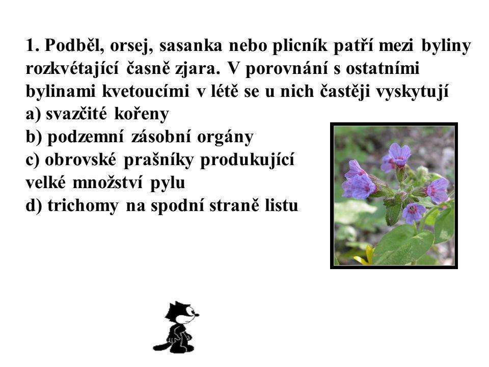 1.Podběl, orsej, sasanka nebo plicník patří mezi byliny rozkvétající časně zjara.