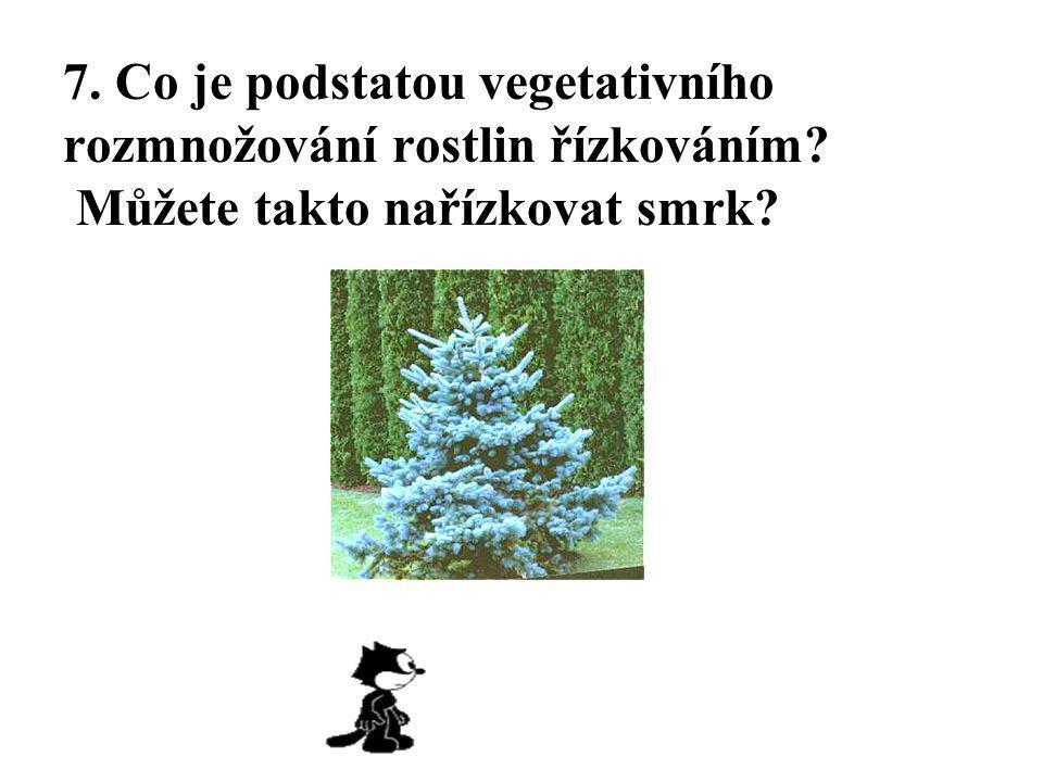 7. Co je podstatou vegetativního rozmnožování rostlin řízkováním? Můžete takto nařízkovat smrk?