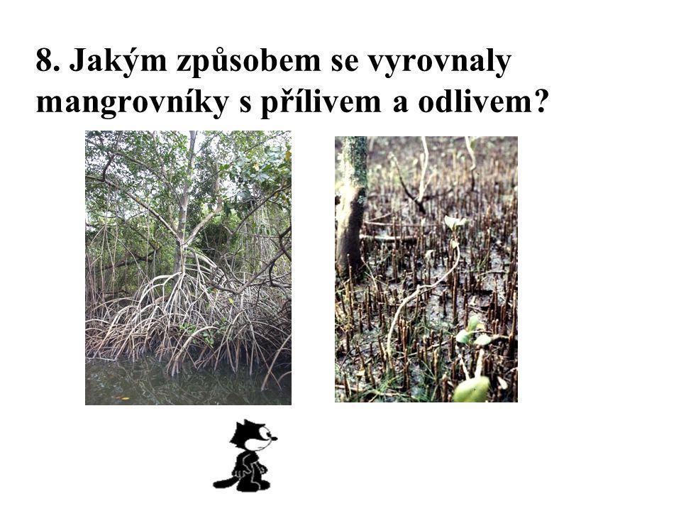 8. Jakým způsobem se vyrovnaly mangrovníky s přílivem a odlivem?