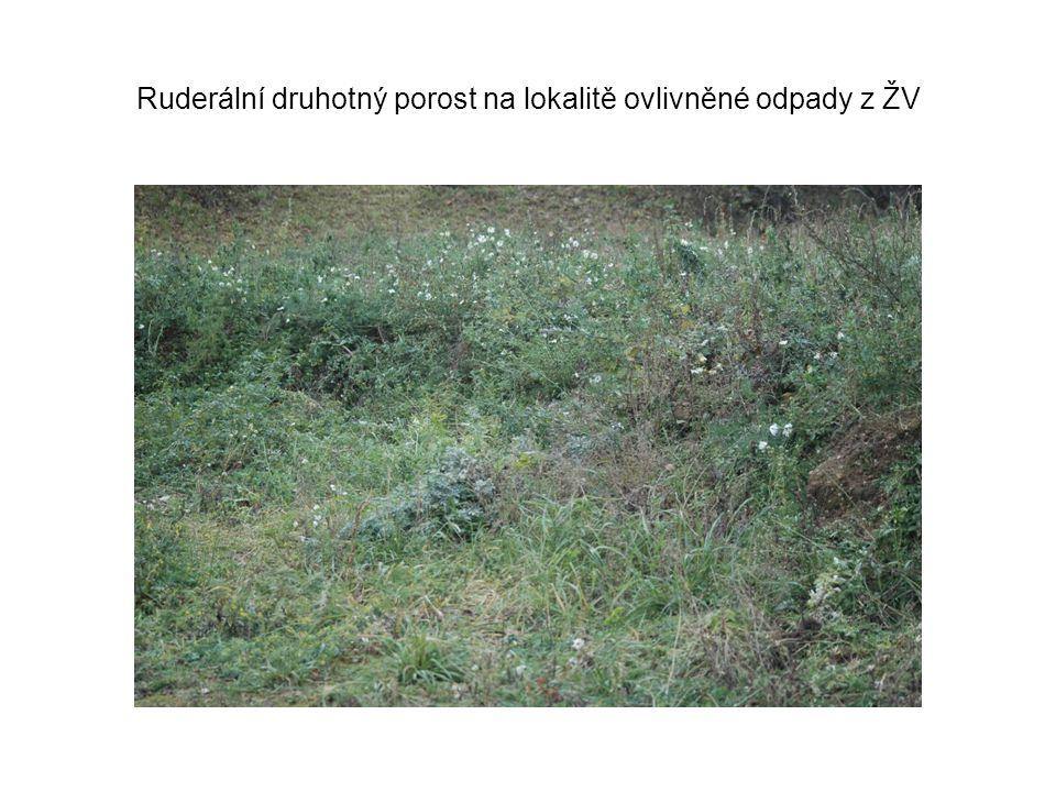 Ruderální druhotný porost na lokalitě ovlivněné odpady z ŽV